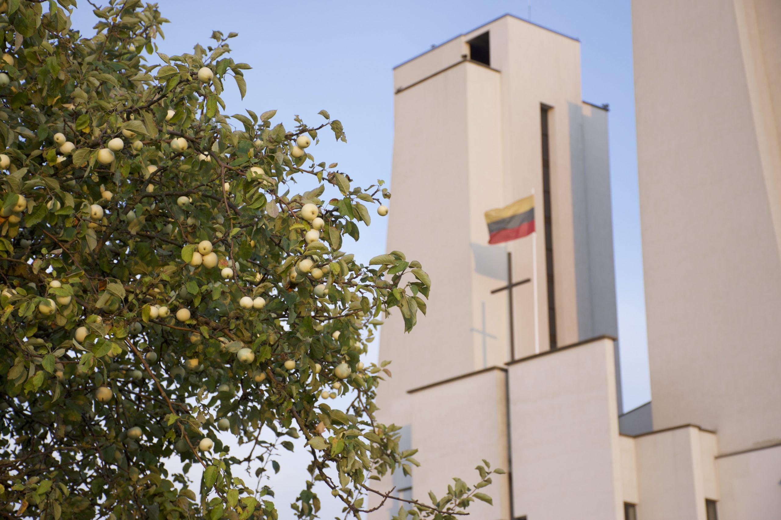 SPALIS – ROŽINIO MĖNUO. Jis yra pašvęstas Švč. Mergelės Marijos garbei. Šiokiadieniais rožinį kalbėsime po 18.00 val. šv. Mišių, o sekmadieniais po 10.00 val. šv. Mišių. SPALIO 19 D. (antradienį) 18.00 val. aukosime sudėtines šv. Mišias už gyvuosius. SPALIO 21 D. (ketvirtadienį) po 19.00 val. vyks Vidinio išgydymo pamaldos. SPALIO 22 D. (penktadienį) 18.00 […]